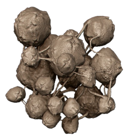H2A Flood spore (render).png